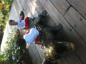 zoo alligator