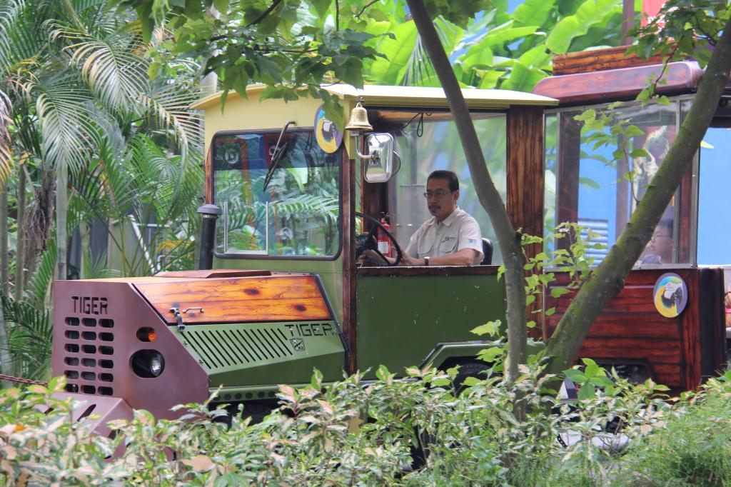 tiger tram