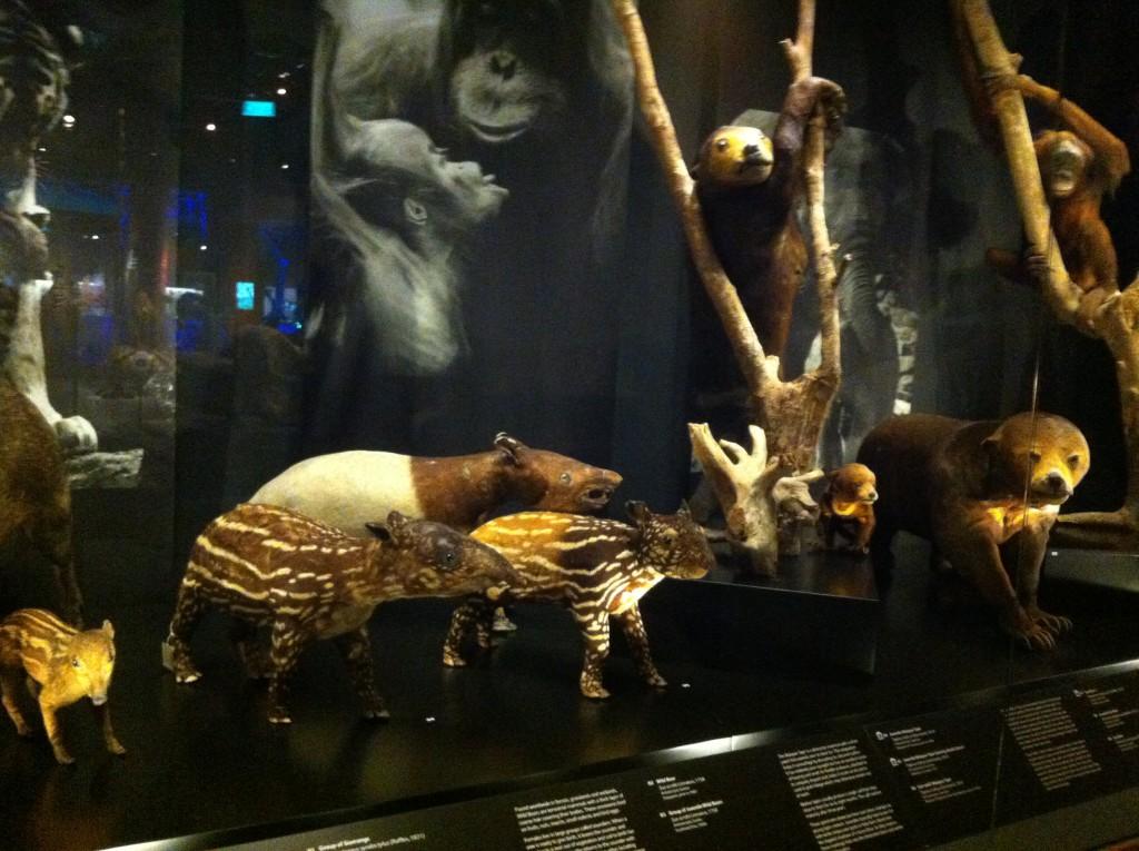 malayan animals